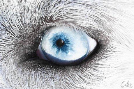 White Beast by Eibo Jeddah via DeviantArt.com
